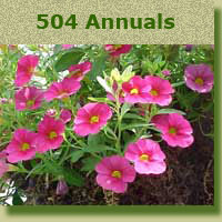 Click to see the list of all our Annuals @ Kerns Nursery